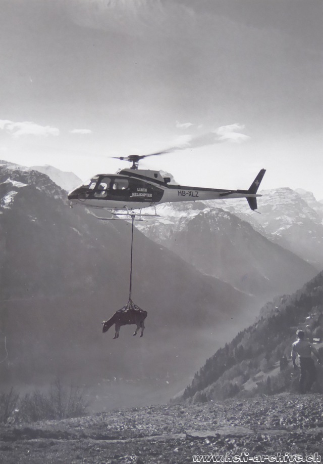 Glarus Alps, early 1980s - An injured cow, hanging in the transport net of the AS 350B Ecureuil HB-XLZ, is airlifted from a mountainous meadow (family Kolesnik)